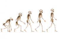 PF_13.12.39_Evolution_promo260x173